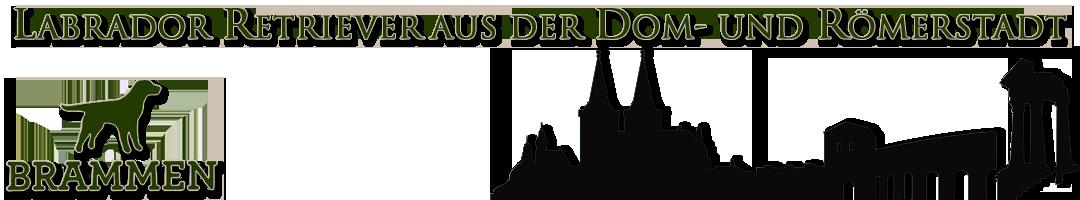 Labrador Retriever aus der Dom- und Römerstadt