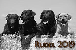 Rudel 2019